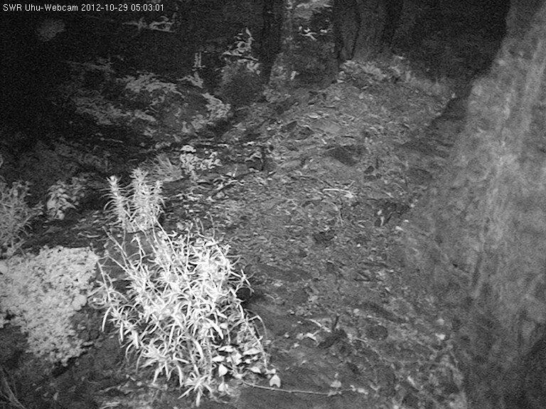 2012-10-29--05-03-01.jpg