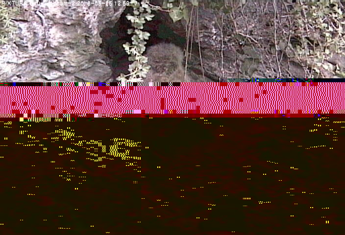 2016-05-25--13-03-01.jpg