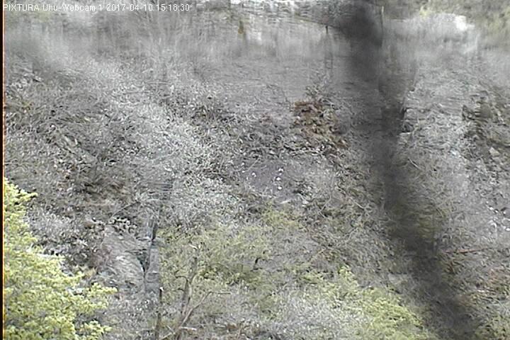 2017-04-10--15-33-01.jpg