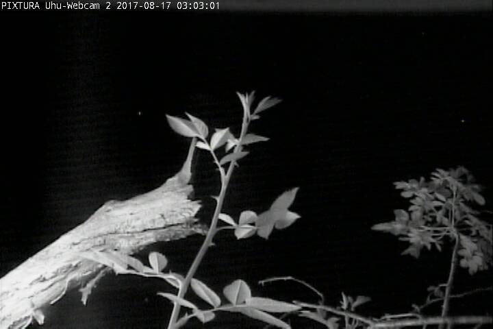 2017-08-17--03-03-01.jpg
